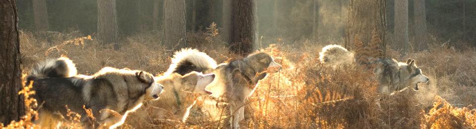 Eine im Ansatz andere Ansicht über Hunde und Halter
